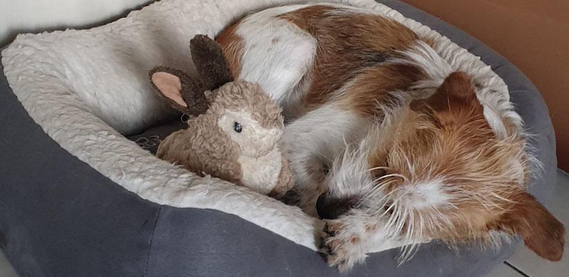 Nachmittagsschläfchen für Amy und Hasi