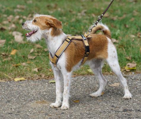 Amy, das erste Mal beim Spaziergang