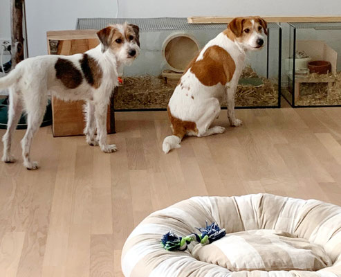 Aiva zeigt Bijou ihre tierischen Freunde, bei Familie Aiva wohnen Rennmäuse.