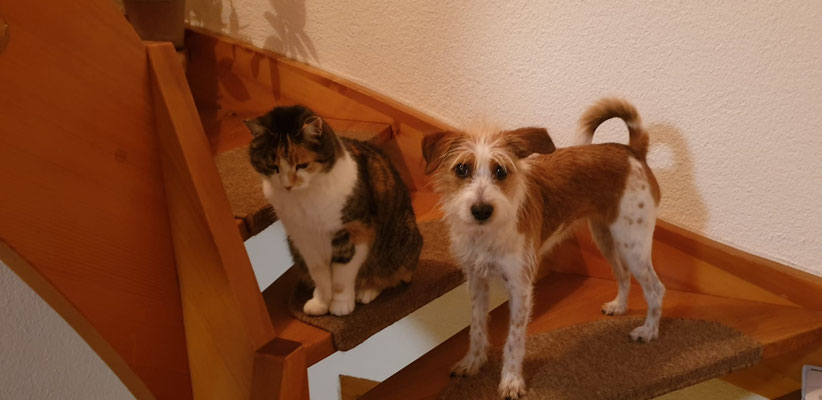 Amy mit ihrer Katzenfreundin Mischi