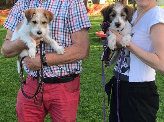 Aki und Arwen besuchen die selbe Hundeschule