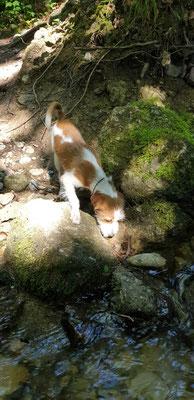 Anfang Juni, Amy erkundet den Bergbach