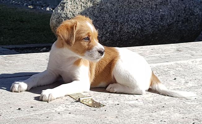 Amélie beim Sonnenbaden
