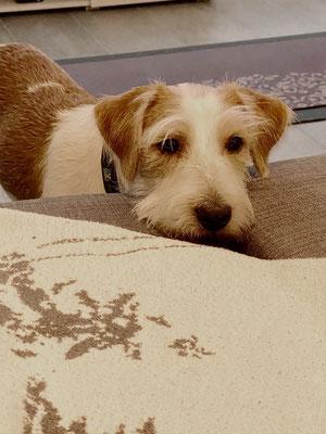 darf ich aufs Sofa?