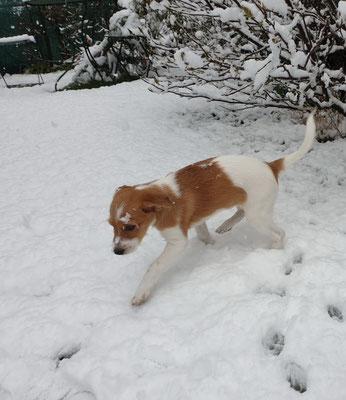 wouw! so viel Schnee im April... Amélie war mässig begeistert... ;-)