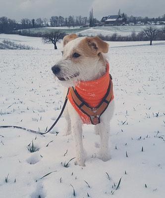juhui! der erste richtige Schnee