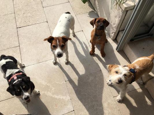 Das 4er-Pack! ;-) 4 Freunde, wie schön!