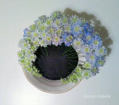 今年の夏透き通るような素敵なお花に出会った。 この1本のお花を大切に生けたい、そんな思いで生けた形は、いつしかフカヒレちゃん。