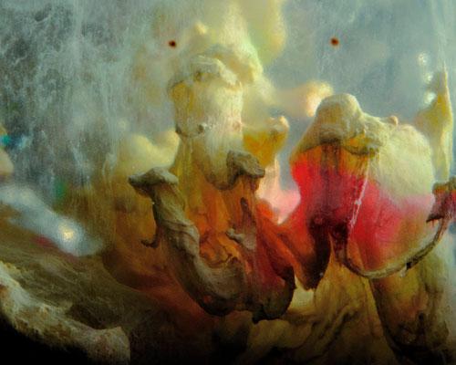 "2016-02-08, ""Dancing mushrooms"", floating acrylics"
