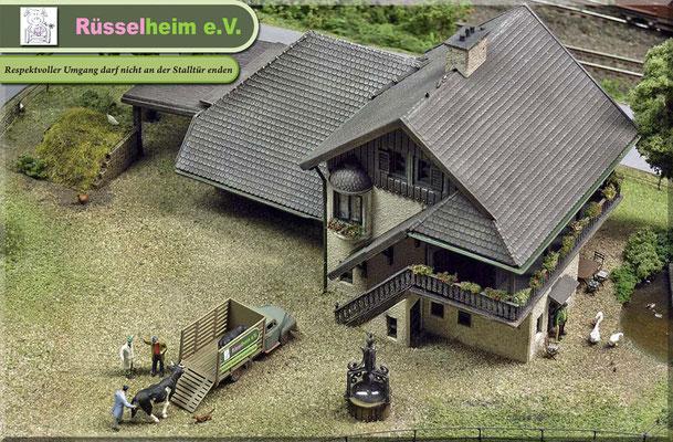 Seine wenigen noch vorhandenen Milchkühe hat er Rüsselheim e.V. geschenkt und sogar für 2 Tiere Patenschaften übernommen. Berta & Yvonne beim Verladen.