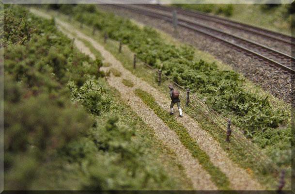 Ein einsamer Wanderer, der entlang der zweigleisigen Haupstrecke (Paradestrecke) unterwegs ist. Auch diese Preiser-Figur (wie die meisten auf der Anlage) wurde selber mit Revell-Farben bemalt. Dabei sollte man immer mit den hellen Farben beginnen.