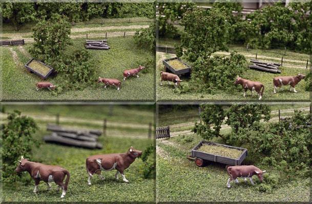 Die braun-gefleckten Kühe - von Bauer Pfiffer - auf der Weide. Anscheinend schmecken ihnen die frischen Blätter des Buschwerks besser als saftiges Gras, oder das aromatische Heu aus dem Anhänger. Kühe: Preiser, Anhänger: Marks Metallmodellclassics´s.