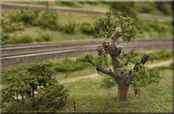 Dieser knorrige/verkrüppelte Baum ist ein Eigenbau aus 'nem Zweiglein von Schwiegermutters Liguster-Hecke, ein paar wenigen Ästchen aus Seemoos-Stängeln + etwas Woodland Coarse-Turf. Solche Unikate gibt's nicht zu kaufen, die muss man selber basteln.