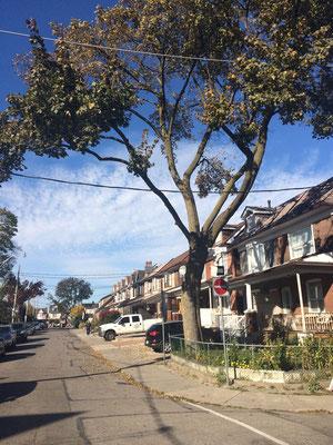 Austauschschülerin Merle verbringt ihr Auslandsjahr mitten in Toronto und dennoch in einer entspannten, grünen Nachbarschaft.