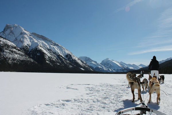 Bei kristallblauem Himmel ging es mit dem Hundeschlitten über den zugefrorenen See.