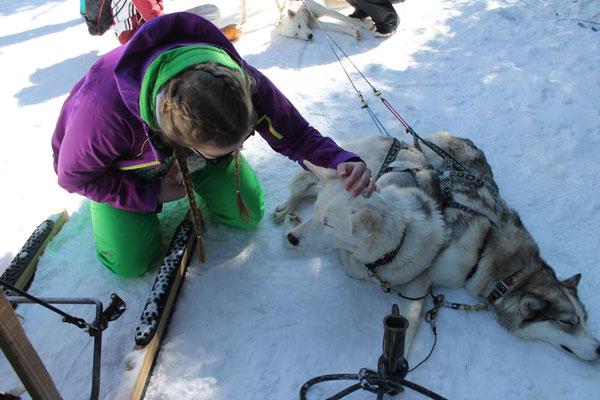 Je mehr die Huskys gestreichelt und gelobt wurden, desto schneller liefen sie durch den Schnee