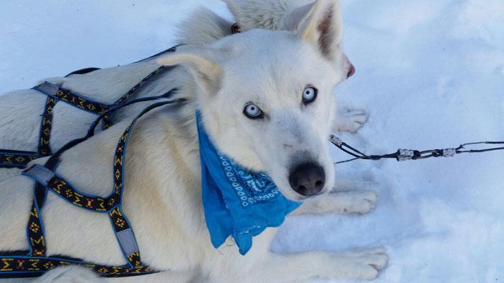 Die charakteristischen Augen der Hunde haben Teresa beeindruckt