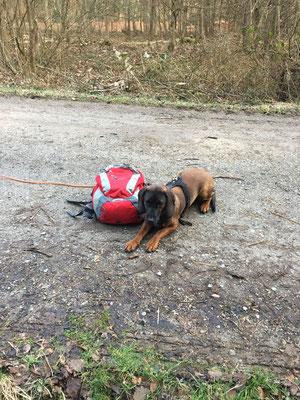 Warum muss ich hier neben diesem Rucksack liegen? Ich wüsste schon etwas anzustellen im Wald.