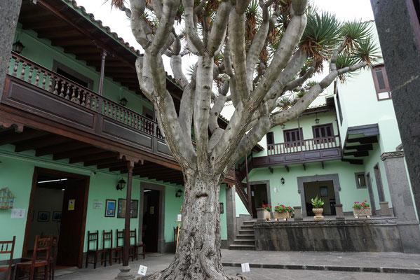 Den Baum hätt ich auch gern im Garten stehen ;-)