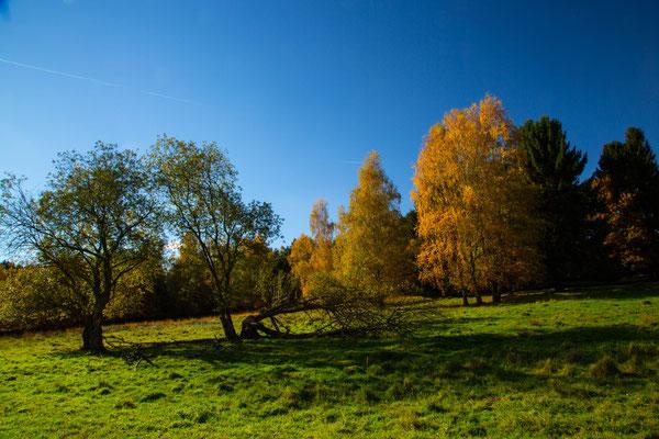 Landschaft  Brander Wald