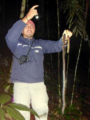 Riesenregenwurm