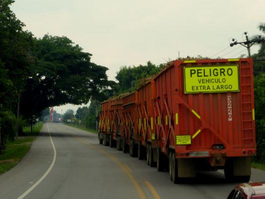 In der Zuckerrohr-Region treffen wir auf unzählige dieser Roadtrains