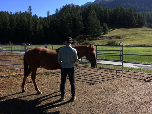 Die Beziehung zum Pferd beginnt am Boden