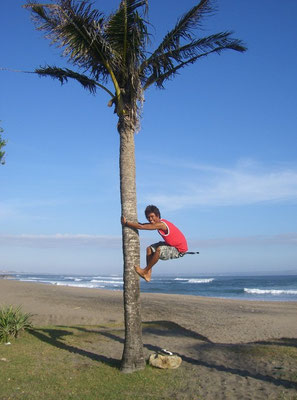 climbing palm tree