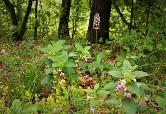mooi boeket met orchidee, dovenetel en nog wat geels