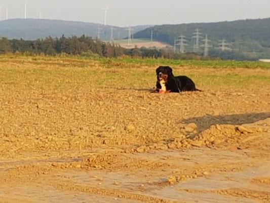 Ella und ihr Ball
