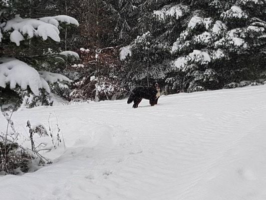 Julchen - Montana Miracle Carallsa
