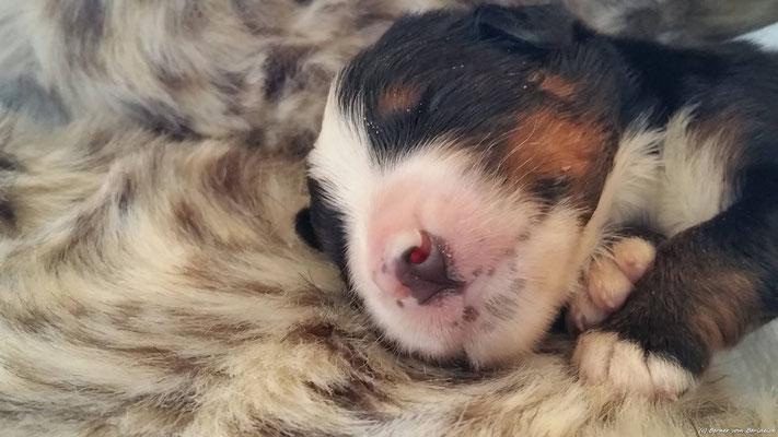schlaf gut kleines Mädchen