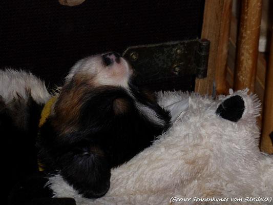 schlaf gut Süsse