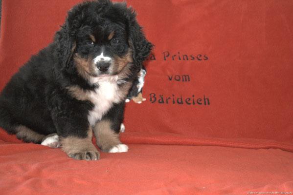 Estella Prinses vom Bärideich - 8 Wochen
