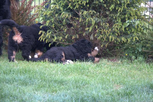 verstecken im Gebüsch - der Garten ist unser
