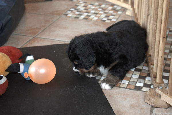 Estella und der Luftballon