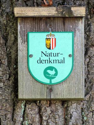 Naturdenkmal Kaiser-Linde