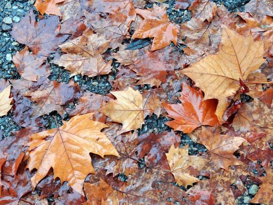 Blätter fallen, fallen wie von weit, als welkten in den Himmeln ferne Gärten