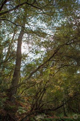 Leur versant oriental, abrupt, abrite une végétation luxuriante, pour le bonheur de la couleuvre d'Esculape et de la coronelle girondine...Étang de Cousseau