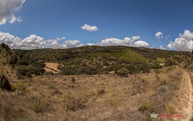 Cereales, viñedos y molinos de viento, entre Ujué y San Martín de Unx, Navarra / Céréales, vignes et éoliennes, entre Ujué et San Martin de Unx (objectif 14mm)