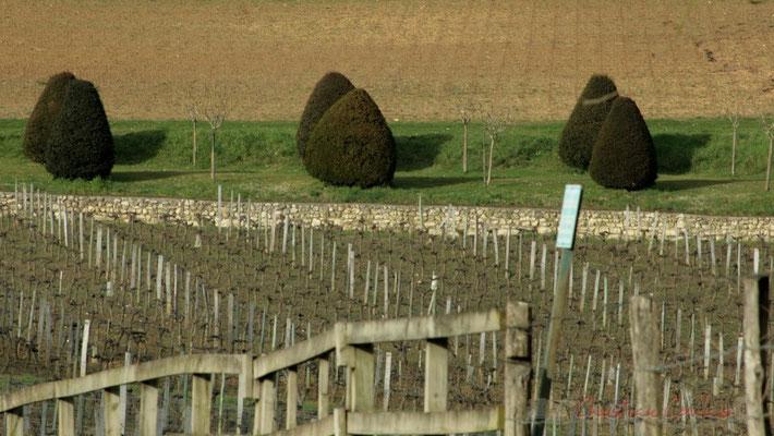 Jeunes plants de vigne et allée, face au Chaâteau de Carignan. Carignan-de-Bordeaux
