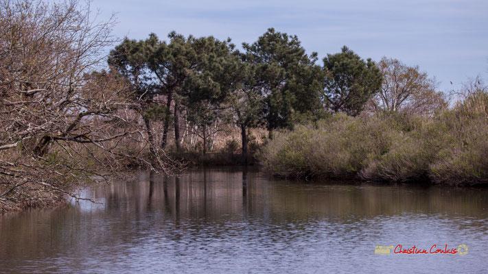 Réserve ornithologique du Teich, samedi 16 mars 2019. Photographie © Christian Coulais