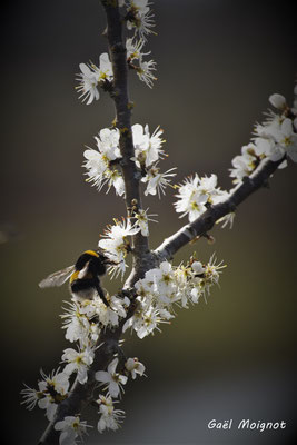 """""""C'est le printemps."""" Réserve ornithologique du Teich. Photographie Gaël Moignot. Samedi 16 mars 2019"""