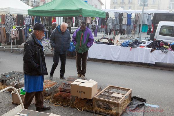 Vente traditionnelle d'œufs, poussins, volailles, lapins, marché de Créon, Gironde