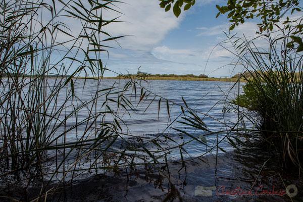 L'eau claire a des reflets sombres, une eau ferrugineuse...Étang de Cousseau