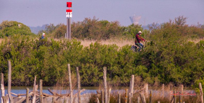 Vélotourisme au large de la réserve ornithologique du Teich. Samedi 3 avril 2021. Photographie © Christian Coulais