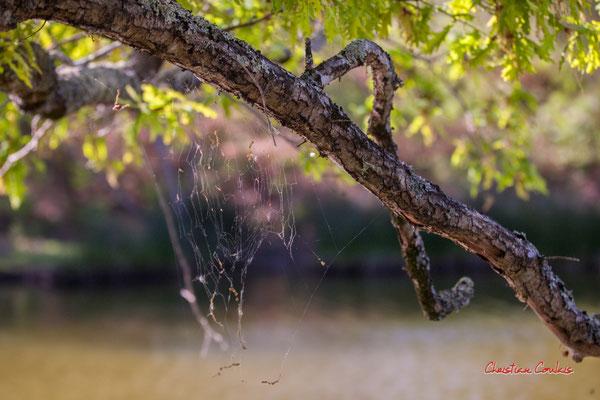 """""""Au fil du vent"""" Réserve ornithologique du Teich. Samedi 3 avril 2021. Photographie © Christian Coulais"""