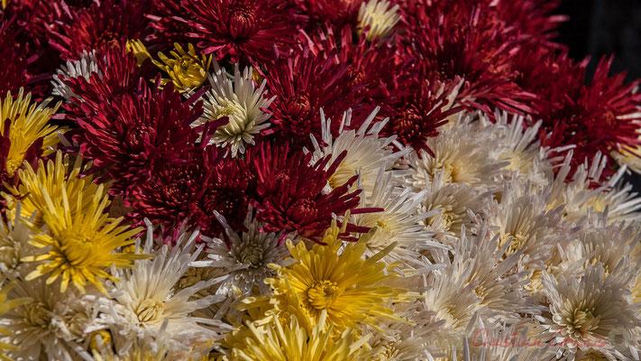 Chrysanthèmes, Cimetière marin de Talmont-sur-Gironde