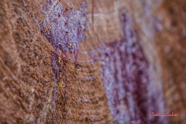 2/2 Larme de résine de pin, oléorésine des conifères du genre Pinus. Forêt de Migelan, espace naturel sensible, Martillac / Saucats / la Brède. Samedi 23 mai 2020. Photographie : Christian Coulais