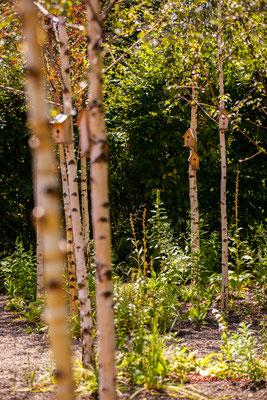 Dans les yeux de Mère Nature. MAAK.space : Mark VAN DER BIJ, Louise MABILLEAU, ingénieurs paysagistes, Karin VAN ESSEN, paysagiste concepteur, Thyra BAKKER, étudiante Design d'espace. Chaumont-sur-Loire, lundi 13/07/2020. Photographie © Christian Coulais